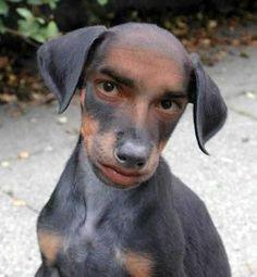 L'uomo-cane. Racconto breve di Iannozzi Giuseppe