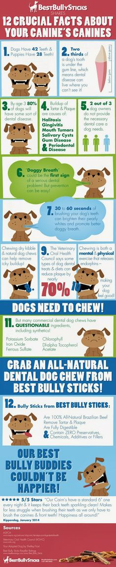 February is Pet Dental Health Month! Best Bully Sticks #Review