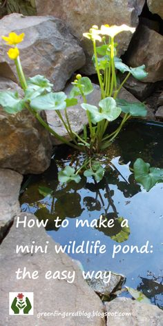 to make a mini wildlife pond - the easy way Make a small pond to attract wildlife to your garden. It takes one afternoon and costs less than This pond will fit in any garden, however small. Ponds For Small Gardens, Small Ponds, Backyard Water Feature, Ponds Backyard, Backyard Waterfalls, Koi Ponds, Mini Pond, Natural Pond, Natural Garden