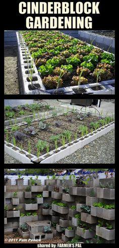 Cinderblock Gardening