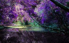 Lilac tree-Lilac draws protective spirits into one's life.