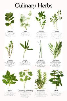 Midsummer Container Herb Garden Growing herbs Herbs garden and