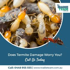 Termite Pest Control Melbourne - Call us at 0448955555 for emergency Termite inspection & protection. We are Australia's termite pest control expert. Signs Of Termites, Types Of Termites, Termite Pest Control, Termite Damage, Termite Inspection, Pest Control Services, Melbourne