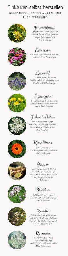 Tinkturen können ganz einfach selbst hergestellt werden. Es gibt unzählige wunderbare Heilpflanzen, die sich für Tinkturen eignen.