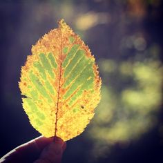 green,brown,yellow time...