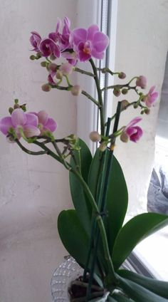 Orchid Care, Balcony Garden, Growing Vegetables, Bonsai, Recovery, Orchids, Diy And Crafts, Glass Vase, Flora