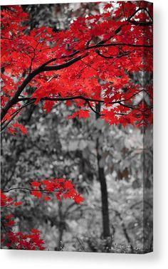 Last Fall Colors 2 Canvas Print