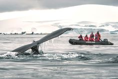 Au paradis des glaces Ours Grizzly, National Geographic, Grands Lacs, Paris Match, Fjord, Paradis, Panama, Caribbean, Whale