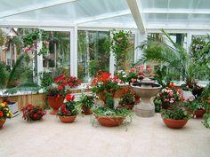 my work / цветущие растения в зимнем саду