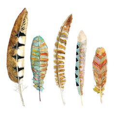 Feather Art. Nature Decor. Archival Watercolor Print. ($38) ❤ liked on Polyvore featuring home, home decor, wall art and watercolor wall art