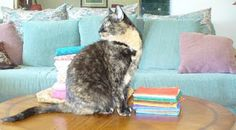 The Quilting Cat, my cat Piwacket's blog.