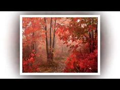 Fabulous Collection of Autumn Photos, Fall Pictures and Beautiful Pictures of Autumn Season from Fabulous Nature. Displaying images 1 to Autumn Scenery, Autumn Nature, Autumn Forest, Nature Tree, Autumn Trees, Autumn Leaves, Misty Forest, Forest Path, Tree Forest