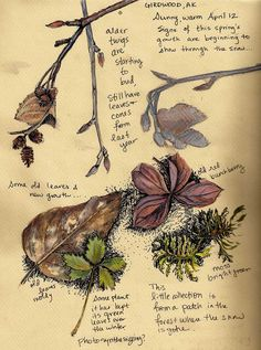 Nature, journal, sketchbook, notebook, dairy, words and images, drawing.