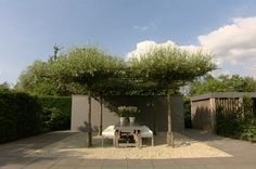 91 beste afbeeldingen van tuin inspiratie plants dream garden en