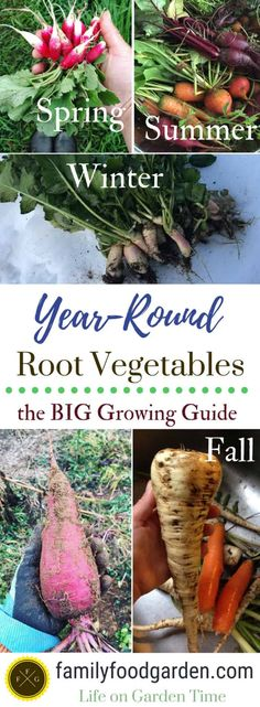 Big guide to growing root vegetables How to grow root vegetables. Learn the best root vegetables for each season, and tips for growing root vegetables year-round. Gardening Zones, Gardening Tips, Kitchen Gardening, Fairy Gardening, Growing Winter Vegetables, Hydroponic Farming, Diy Hydroponics, Vegetable Garden Tips, Greenhouse Growing