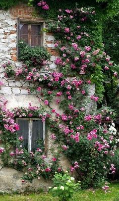 stone house with pink roses