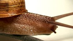 Macro film of a snail