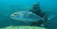 zıpkınla balık avı ile ilgili görsel sonucu