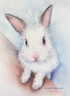 This white bunny rabbit is available as the original watercolor painting, print and greeting cards. Perfect for the bunny art nursery or anyone who loves bunnies for their decor!   To view more animal artwork by Teresa Silvestri, visit www.SilvestriStudios.com  (Photo reference thanks to East Bay Rabbit Rescue)