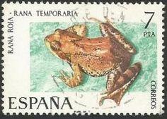 La rana bermeja es una especie de anfibio anuro de la familia Ranidae. Es común en Europa y el noroeste de Asia.