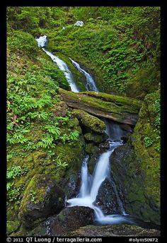 Merriman Falls. Olympic National Park, Washington