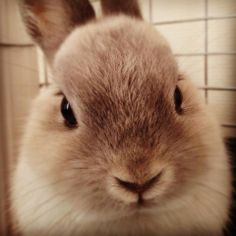 うさぎ Animals And Pets, Funny Animals, Cute Animals, Dwarf Bunnies, Bunny Rabbits, Netherland Dwarf, Most Popular Shoes, Fox And Rabbit, Copenhagen Style