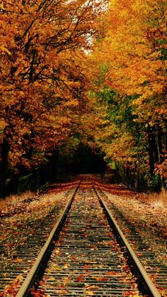 Autumn tracks to nowhere source Flickr.com