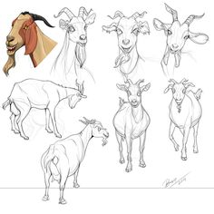 Goat Drawing.