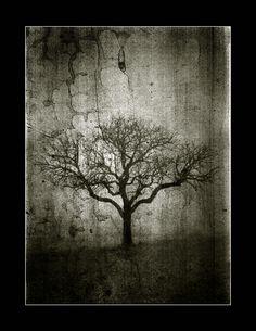 res-excido-natura No1