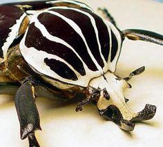 goliath beetle pattern print - Google Search