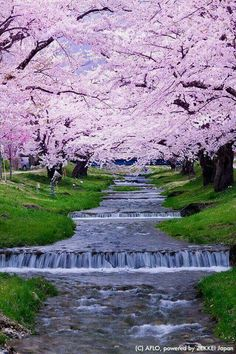 travel japan Japan travel, Japan to - Beautiful World, Beautiful Gardens, Beautiful Places, Beautiful Pictures, Japan Tourism, Japan Travel, Japan Holidays, Blossom Trees, Cherry Blossoms