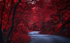 Road-through-red-trees-japan-autunm-nature.jpg (2560×1575)