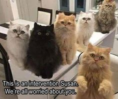 Susan gets an intervention.