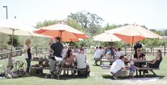 Picnic at Imagery Estate Winery in Glen Ellen