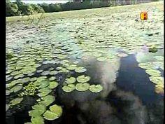 Amapá, terra das águas (Globo Repórter 2007)