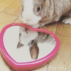 Mirror mirror on the floor... whose the bravest bun of all?! #Tiffo Follow Tiffo on Instagram @tiffoco