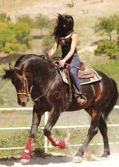 special breed s of horses   Italian breeds of horses: Catria Horse