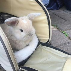 2,084 отметок «Нравится», 36 комментариев — Bunny Shoutouts (@bunbunshout) в Instagram: «Baby Priscilla  Congrats @priscillathebunny Thanks for using my tag! . . . #baby #priscilla…»