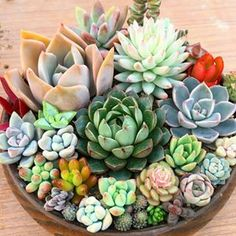 I love the colors in this arrangement from Succulent Bowls, Succulent Gardening, Succulent Arrangements, Succulent Terrarium, Indoor Gardening, Unusual Plants, Cool Plants, Air Plants, Garden Plants