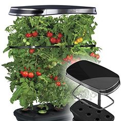 MiracleGro AeroGarden Extra LED Indoor Garden with Gourmet Herb Seed Kit and Bonus Cherry Tomato Seed Pod Kit >>> Check out this great product.