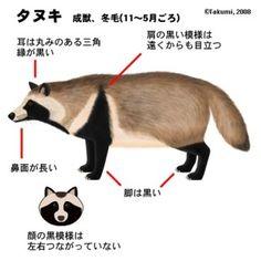 たぬき - Yahoo!検索(画像)