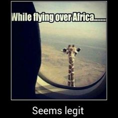 And if you look off to your right, you will see a beautiful view of the clouds, and that really tall giraffe but whatever...   Humor and Funny Pics
