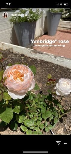 Rooftop Garden, Exterior Design, Landscape, Amazing, Plants, Roses, Yard, Outdoors, Gardening