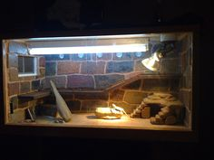 Bearded Dragon . org • View topic - Show Off your Viv!