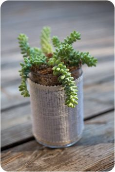 There is just something about succulents, They did not always be popular. Now....well they can be quite expensive,.......unless you have a friend who will share.