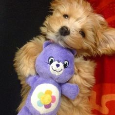 I WANT ONE!!!  ♥A. //  Fetch Care Bears Plush available at PetSmart!