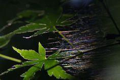 Photo by Gen Minamishima. Cultural Capital, Kanazawa, Ishikawa, Contemporary Art, Plant Leaves, Scene, Japan, World, Plants