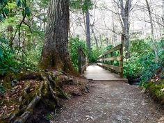Wander into the paths less traveled. #AlumCave #SmokyMountains #VisitSevierville