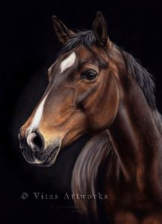 Horse drawing by VitasArtworks on DeviantArt, artist?  Pastel.