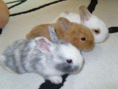 A trio of cute baby bunnies!